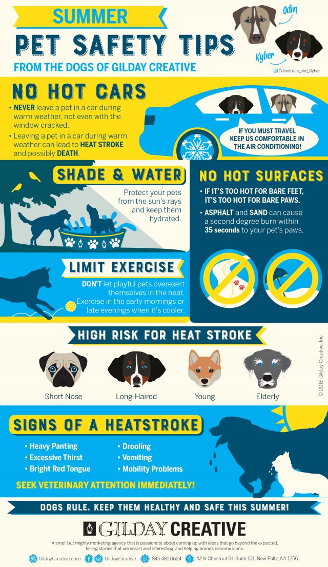 Summer pet safety infographic